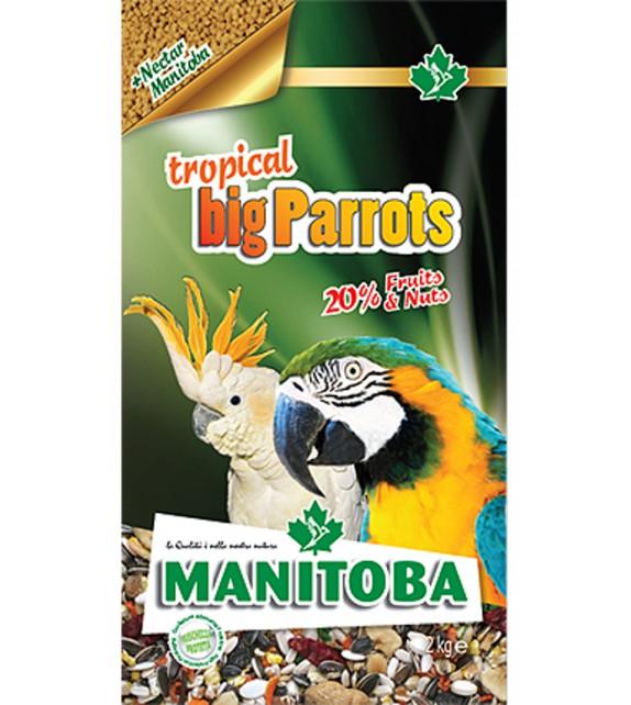 Tropical big Parrots