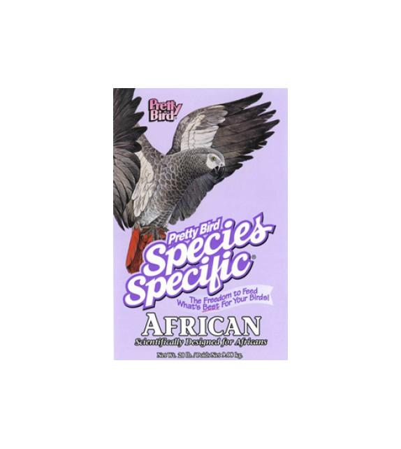 Pretty bird species specific - AFRICAN